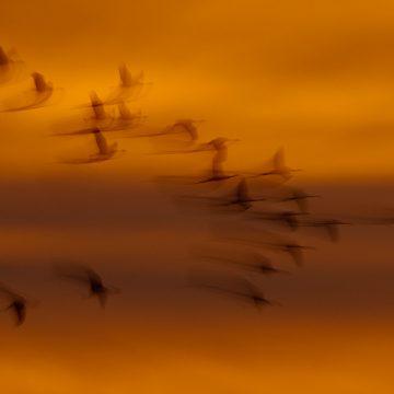 Längere Belichtungszeiten in der Vogel- und Tierfotografie