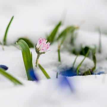 Frühblüher – die ersten Boten des Frühlings